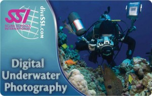 digital-underwater-photography